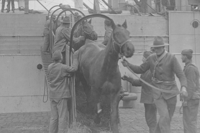 A cargo of horses leaves a transport ship at St. Nazaire. Nearly 50,000 American horses left from Newport News. - Courtesy of the Quartermaster Museum